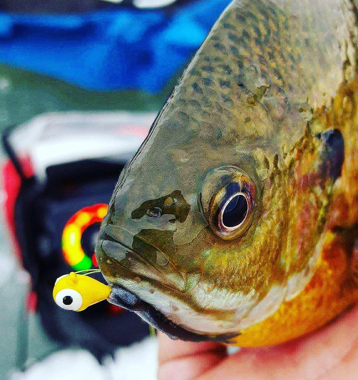 Crappie with a yellow jig in its mouth.