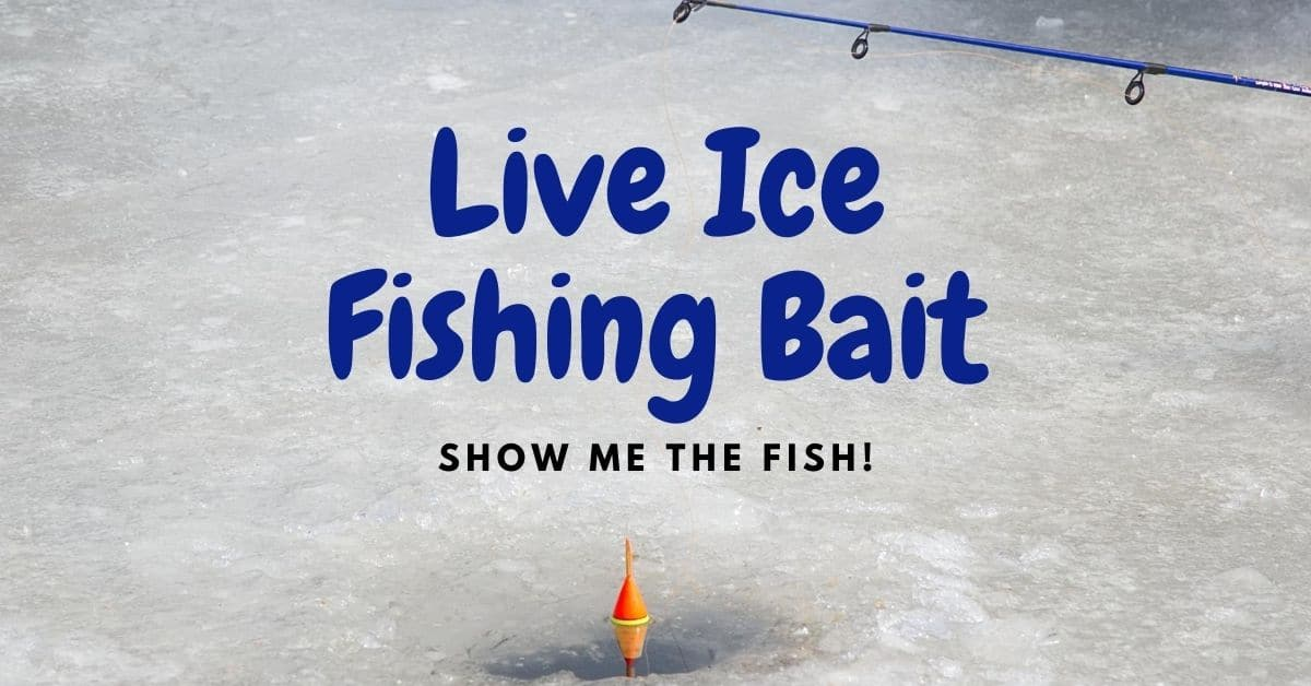 Ice fishing pole with bobber and the words live ice fishing bait.