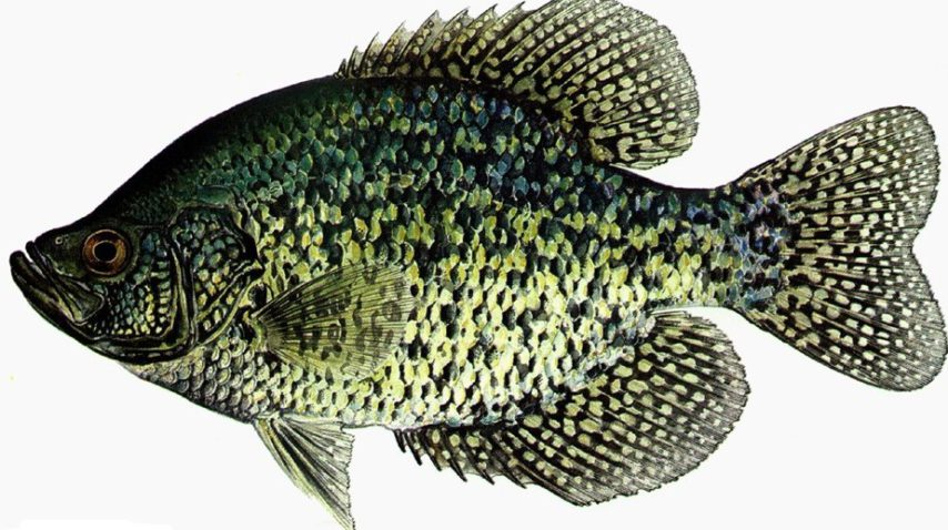 Crappie Ice Fishing Tips