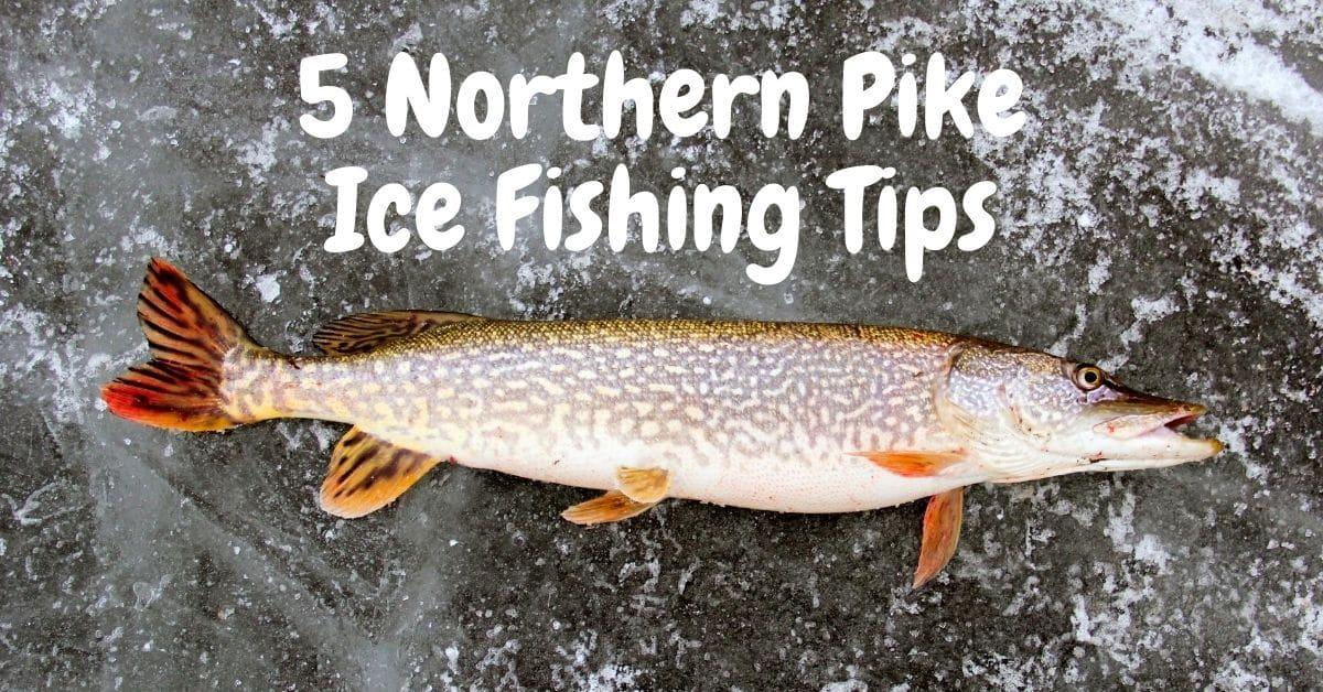 Northern Pike on ice and 5 northern pike ice fishing tips
