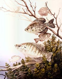 Crappie Fishing Techniques