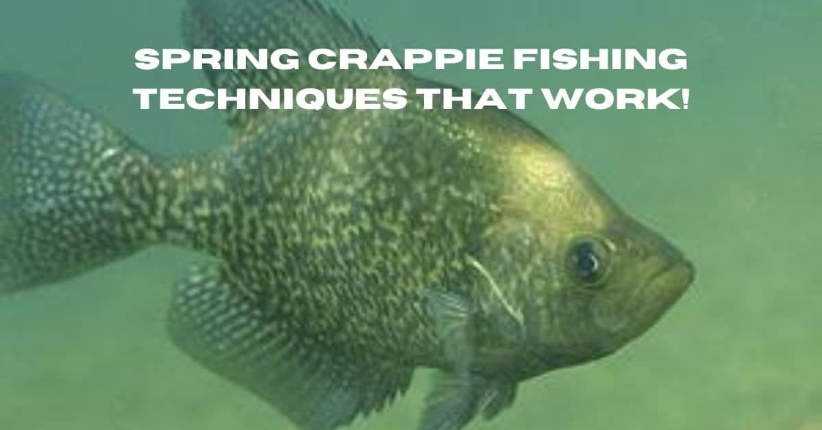 Black crappie with the words spring crappie fishing techniques that work.