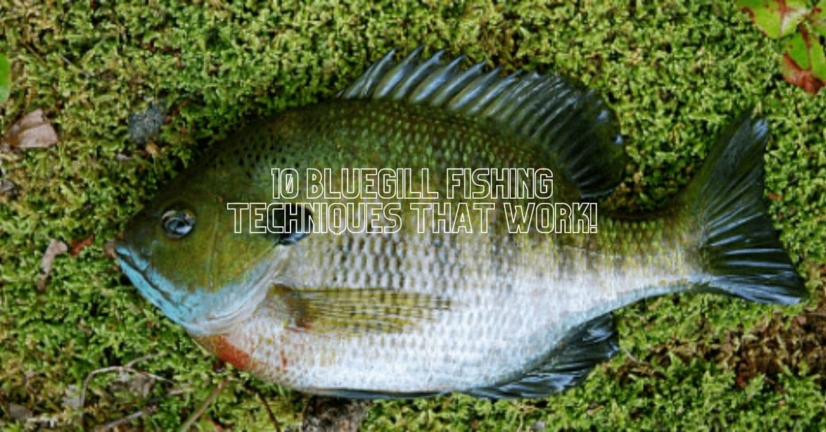 10 Bluegill Fishing Techniques That Work