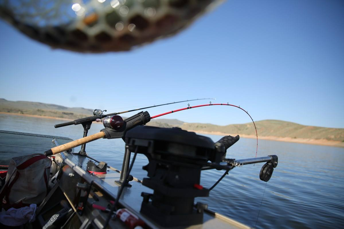 Trolling rods on back of a boat.