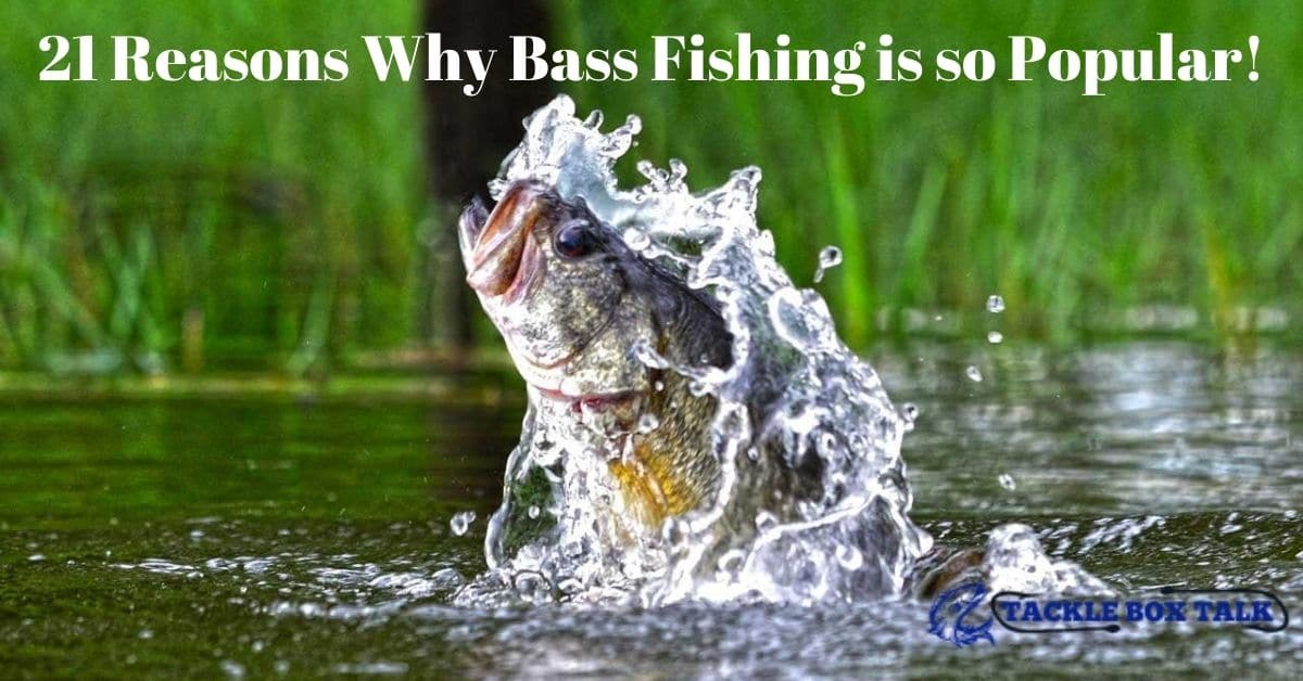 Large mouth bass jumping out of the water - 21 Reasons Why Bass Fishing is so Popular!