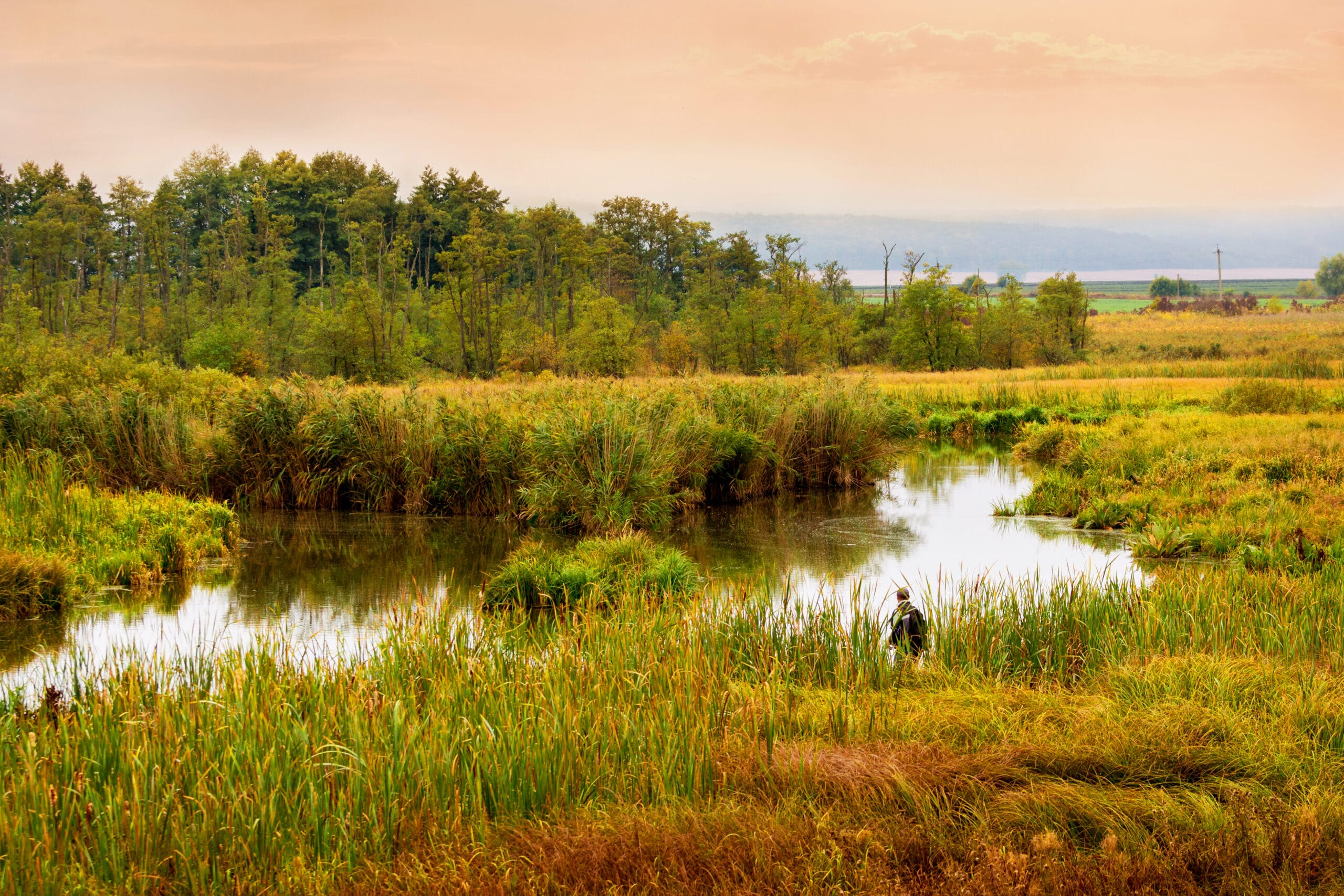 River with dense thickets of reeds and trees in the morning at sunrise_