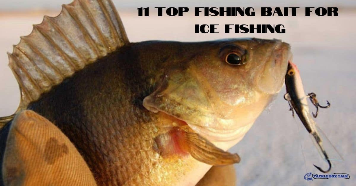 Fish with artificial bait in mouth - 11 top fishing bait for ice fishing