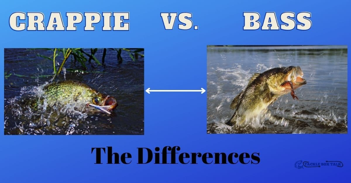 Crappie and bass - Crappie vs. bass